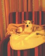 Hund im Kinderhotel Oberjoch